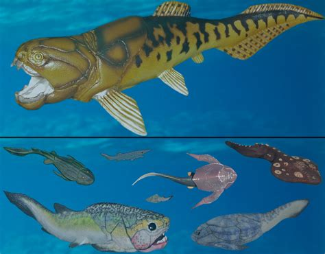 LSC370-Jawless Fishes