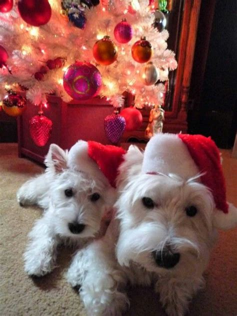 Dogs Who Are Clearly Ready for Christmas (GALLERY)