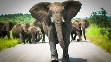 Tourist Captures The Terrifying Moment Angry Elephant Herd