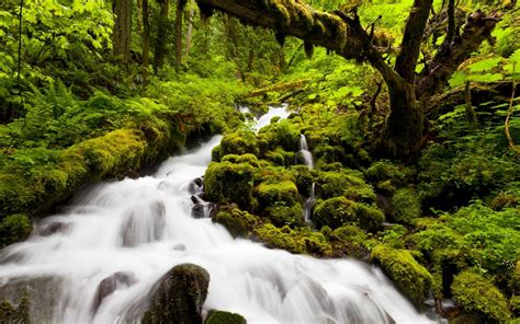 Nature Forests Jungles Rivers Streams Green Water